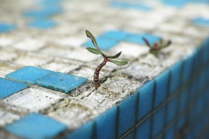 plant-2318936_960_720