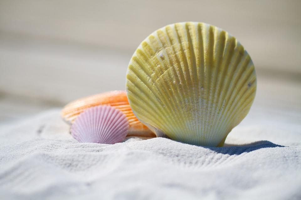 shells-792912_960_720