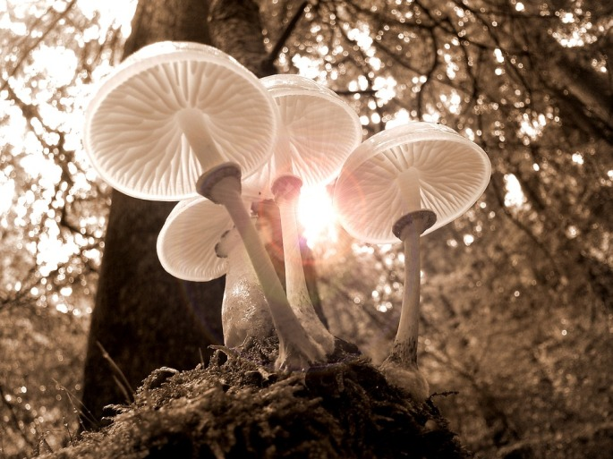 forest-2165911_960_720.jpg