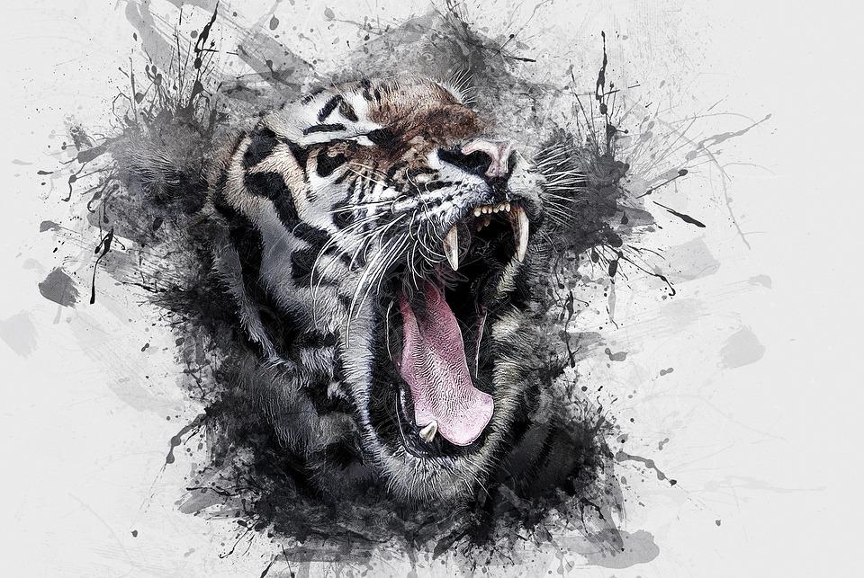 tiger-3248779_960_720