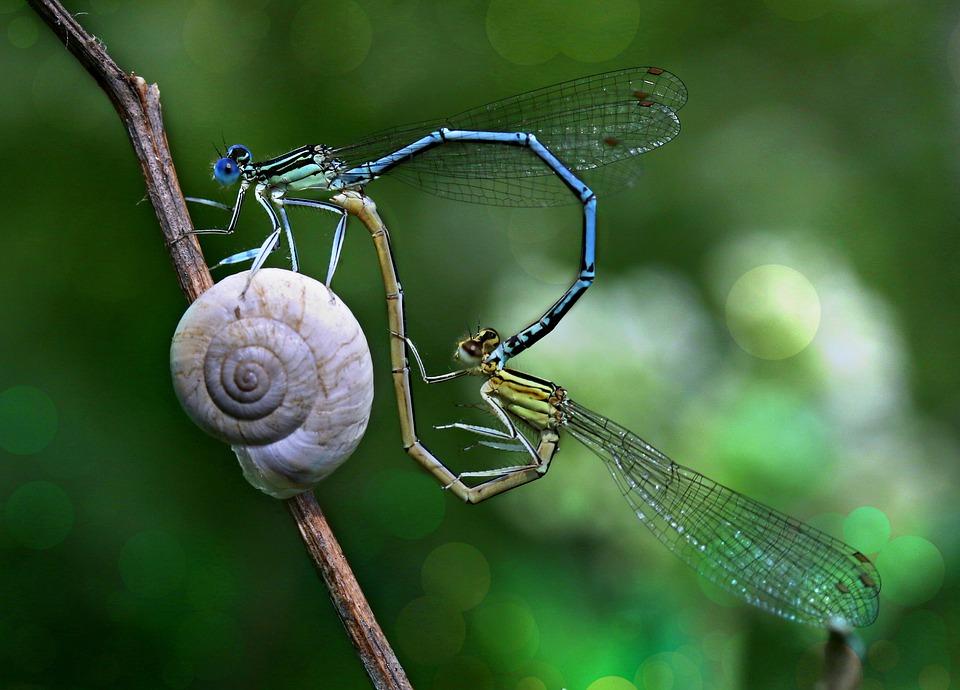 dragonfly-3501115_960_720